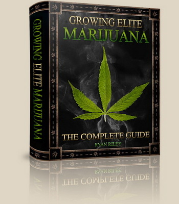 Product picture All.You.Want.To.Know.About.Growing Cannabis Weed Part 1